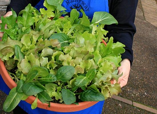Grow Salad Bowls