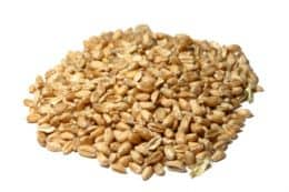 Grinding Our Own Wheat – Part 2: Wheat Berries