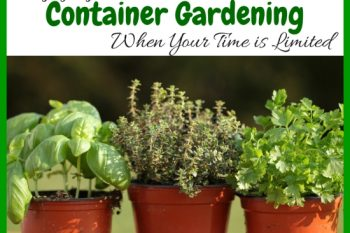 Enjoying Container Gardening When Your Time Is Limited